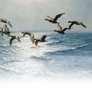 Brent Geese at the Tide's Edge (Painting) by Julian Novorol